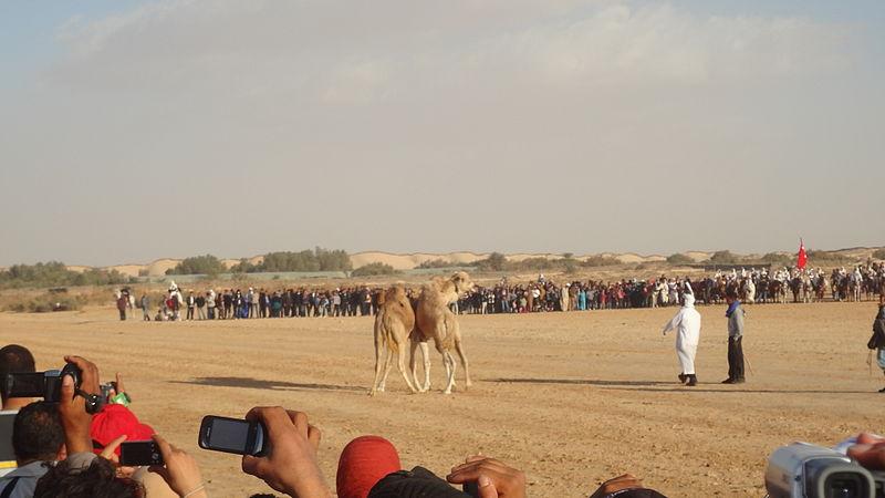 Assister le Festival Sahara de Douz