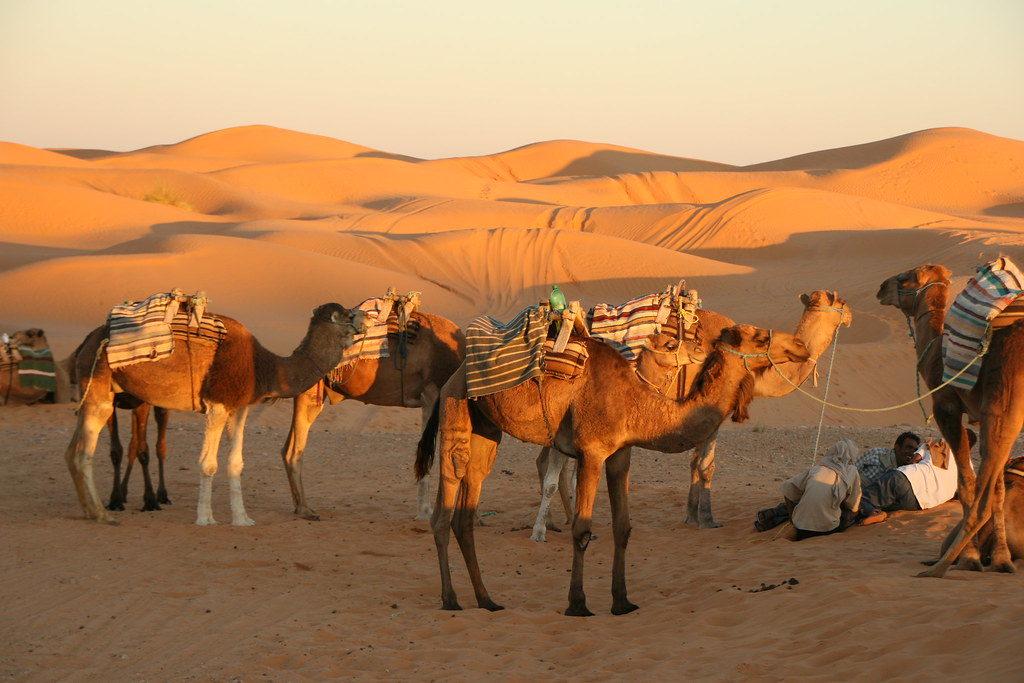 randonnées et excursions sud tunisien