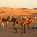 Randonnées et excursions au sud tunisien