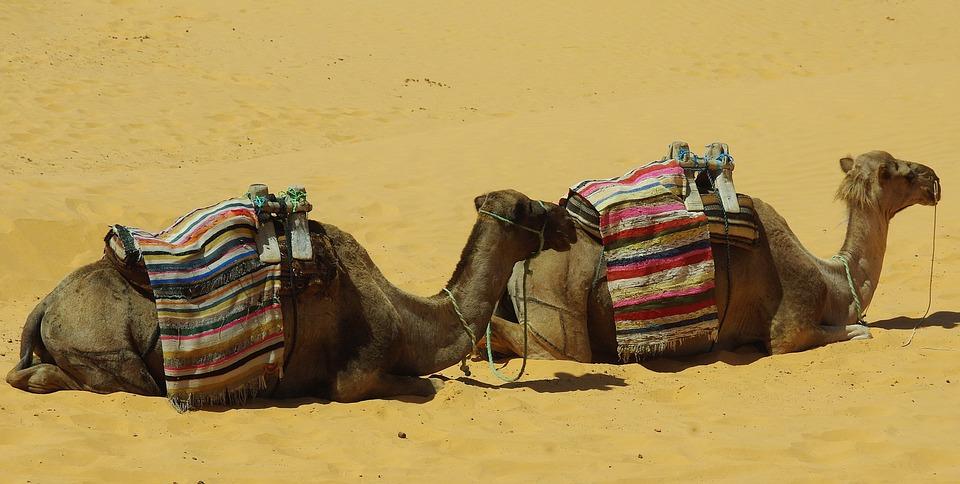 Circuit 15 jours au sud tunisien